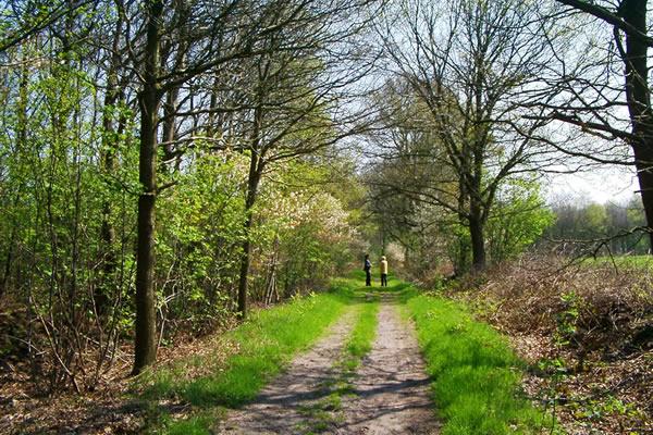 In de Drentse singels (bomenrand om de weilanden) kun je heerlijk wandelen